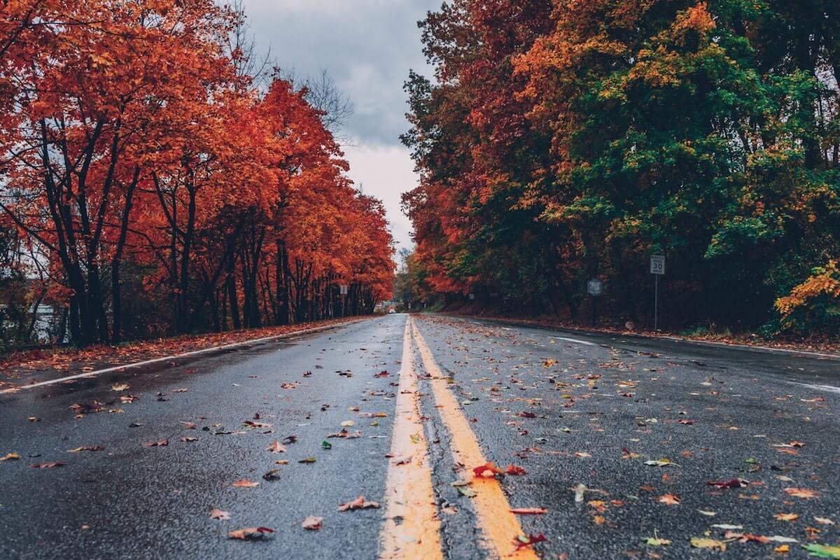 concrete-road-between-trees-1563356 2