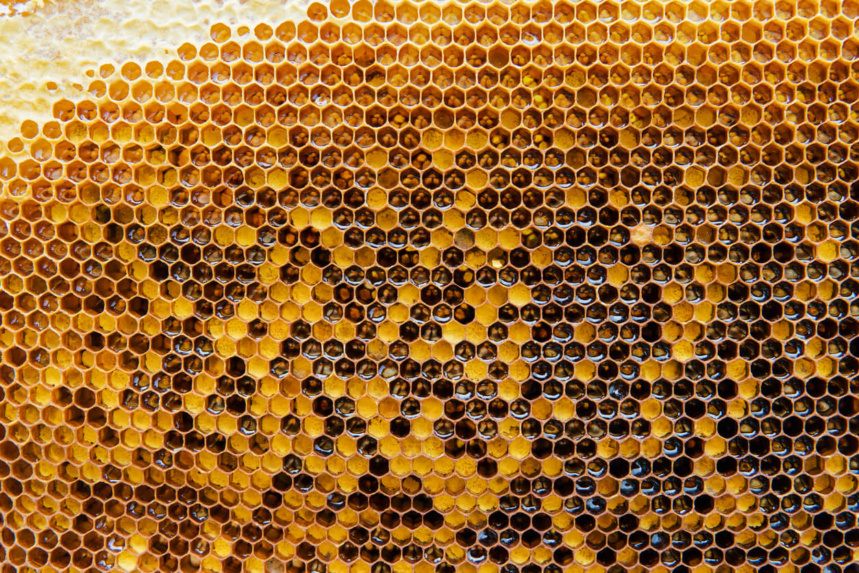 Tapping Into Your Buyers' Hive Mind Are You Missing the