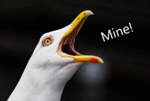 """Seagull squawking, """"Mine!"""""""
